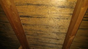 Mold Removal | Missoula Attic Mold | Home Inspector